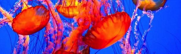 spectatular-jellyfish-via-Shutterstock-615x345